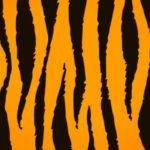 Einsatz von Tiger Teams in Pilotprojekten